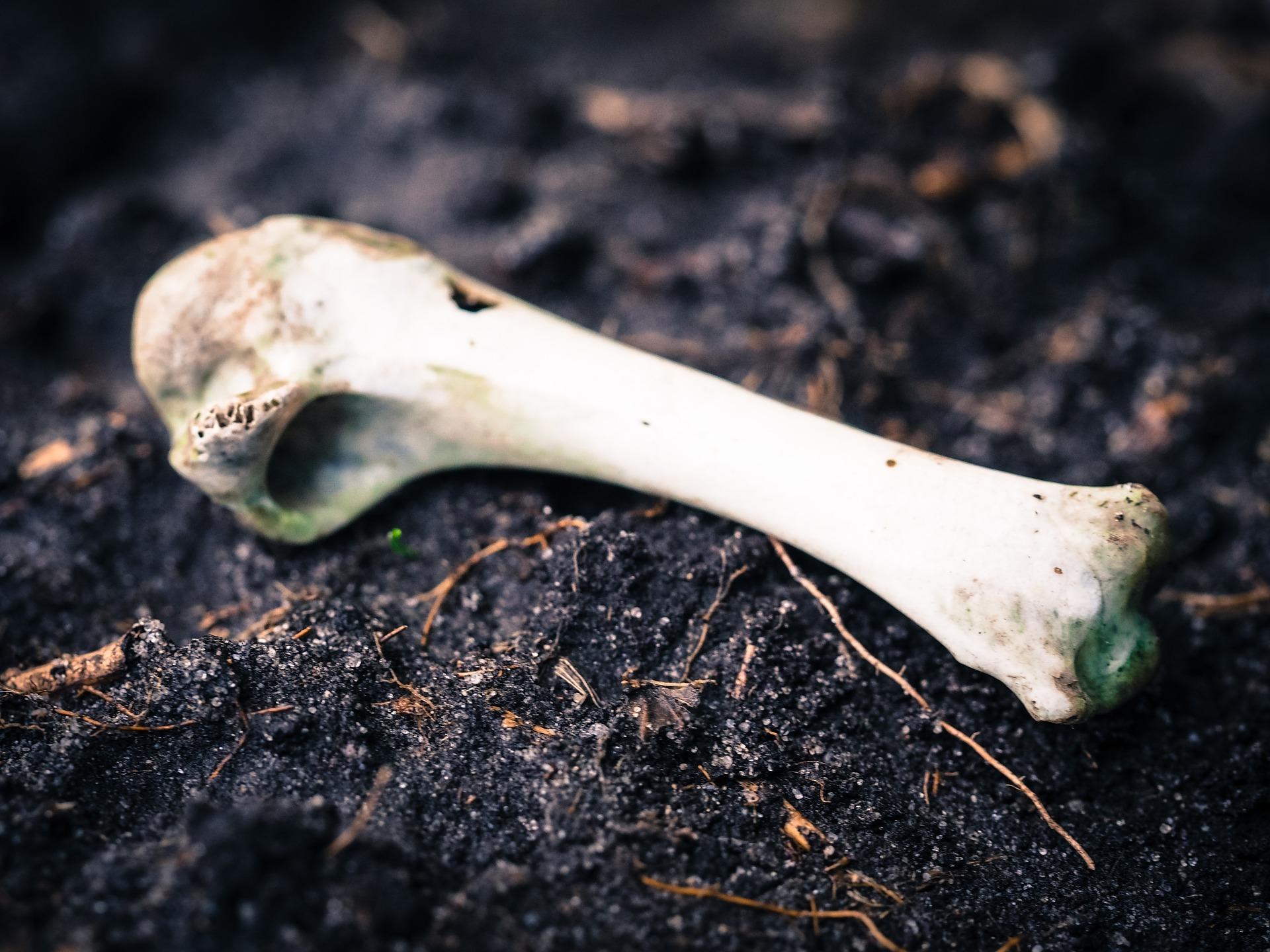 地面に転がる動物の骨